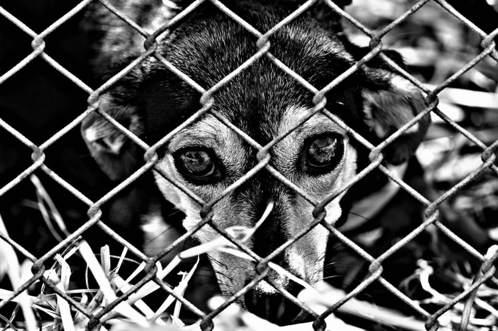 Many dogs are still locked in shelters